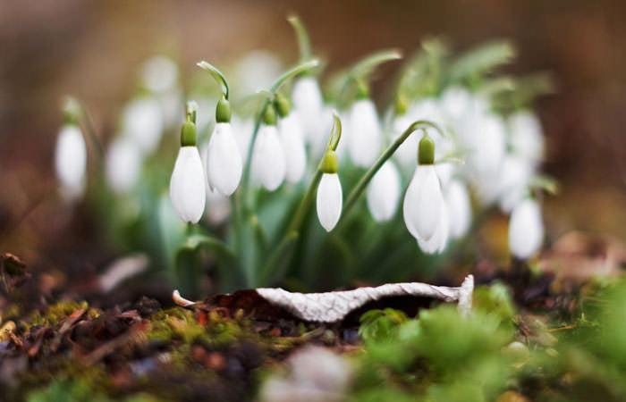 Spring Photograph News