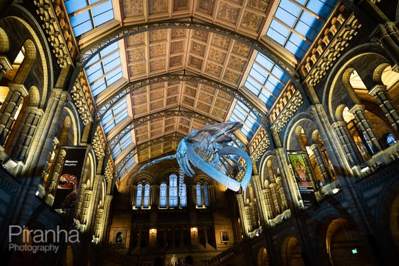 Main hall at Natural History Museum with Blue Whale skeleton