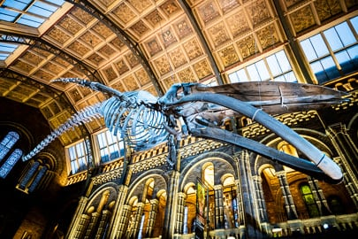 Event Photography at Natural History Museum London
